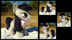 Octavia Filly by fireflytwinkletoes