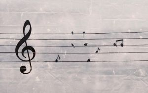 Sing in swallows by Anateq