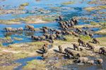 Crossing the Olifants River in Kruger NP by sellsworth