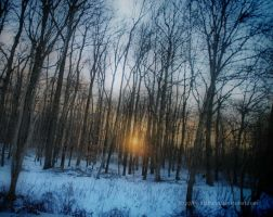 Winter impressions 7 by eschlehahn