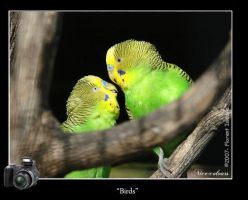 Birds by nice-colours