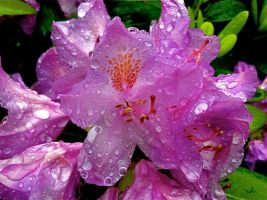 Rhododendron by AgonizingSwordfish