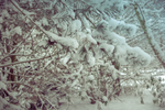 Winter branches by Thubakabra