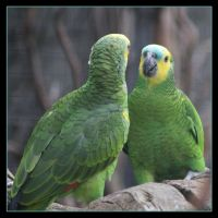 Parrots by Globaludodesign