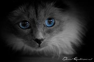My sisters cat.. by danniibooy