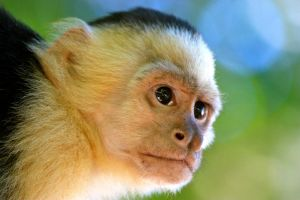 Monkey Close Up by Sp3nc3r-H1nds
