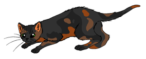 ShadowClan - Tawnypelt by WildpathOfShadowClan