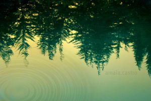 Water trees by amaiacastro98