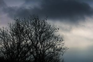 Trees Silhouette against the sky by Danimatie