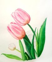 watercolor tulips by aurangelica
