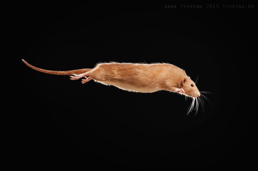 Rat Fleece flies by AnnaTyurina