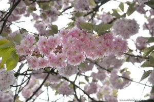 More Spring by Himmelsfalter