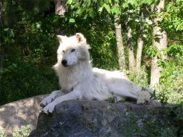 Malik the arctic wolf by Rukii