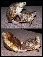Doin' it Turtle Style by LacunaCobra