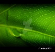 Green Drop by arnhival