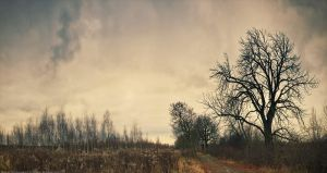 avenue of chestnut trees by mariv