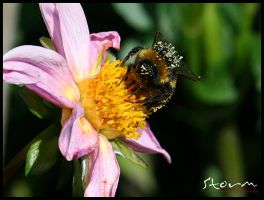 bumble bee v2 by simoner