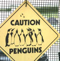 Caution, penguins by uberslug
