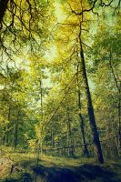 forest 3 by PhotoFrama