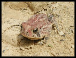 Toad in the Road by Cillana