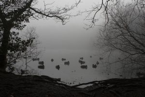 Ducks in Mist by syrus