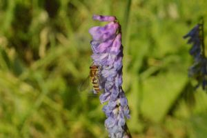Hornet? Wasp? by KayleighBPhotography