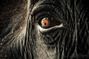 Elephant III by photogenic-art