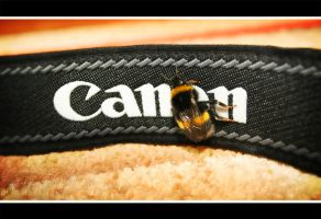 Canon Bee by Triple7