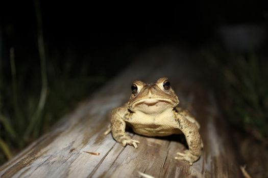 You may call me Sir Ribbit. by yourlittleefftard