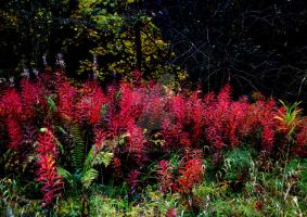 Red weed 2 by PhilipWebb