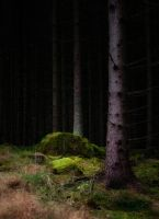 Dark forest by RavensLane