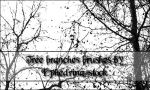 Tree branches brushes by ephedrina-stock