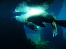 Sea Lion 2 -- Sept 2009 by pricecw-stock