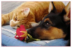 """cat, dog and rose"" by akinna"
