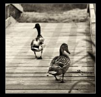 waddle when you walk by cocker666