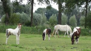 Mares with foals by Horselover60-Stock