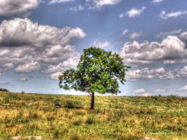 A Lonely Tree by jim88bro