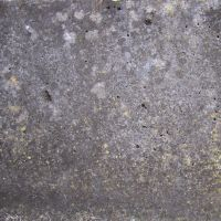 lichen on concrete by warpig-stock