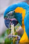 Macaw Parrot 0358o by mym8rick