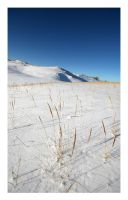 Winter Dune Grass by Julian-Bunker