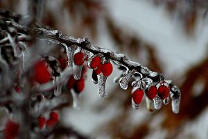 frozen berries by emilyerin11