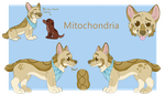 Mitochondria the Corgi - Reference Sheet by September-Colors