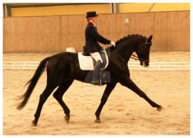 dressage 2 by paula2206-photo