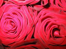 red roses by petalouda1980