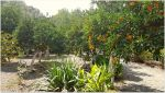 Orange tree garden by ChokoAngel
