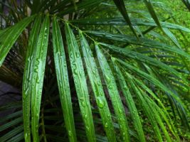 Palm Leaves in the Rain 1 by ApolloNui