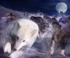 AGOT: Wolves from the North by Thaldir