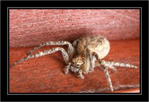Just Spider by comino69