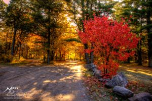 HDR Red Tree by Nebey
