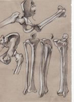 Hips and leg's bone by Lemures87